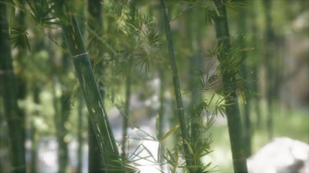 stalk : Green Bamboo trees forest background