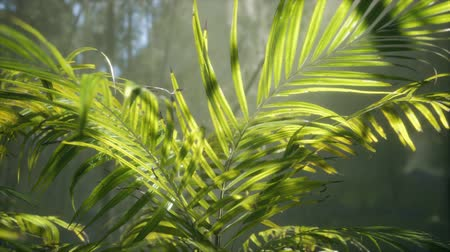 mianmar : bright light shining through the humid misty fog and jungle leaves
