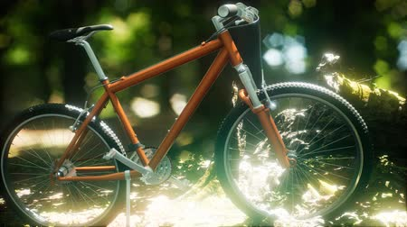 mtb : Mountain bike on the forest path