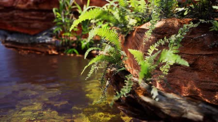minas gerais : tropical golden pond with rocks and green plants