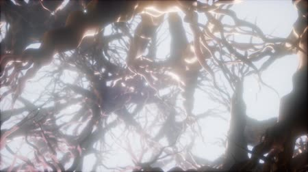 nerves : Journey through a neuron cell network inside the brain Stock Footage