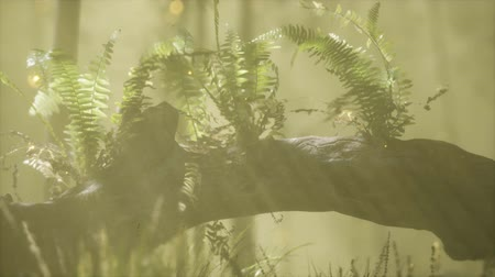 ferns : horizontally bending tree trunk with ferns growing, and sunlight shining Stock Footage