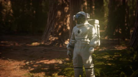 prozkoumat : lonely Astronaut in dark forest