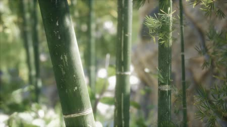 stonky : Green Bamboo trees forest background