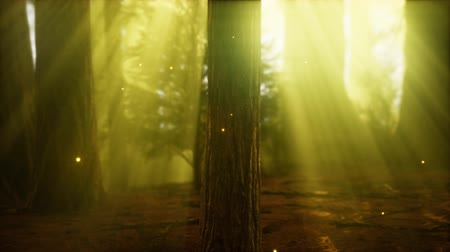 fireflies : firefly in misty forest with fog Stock Footage