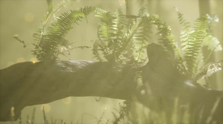 musgo : horizontally bending tree trunk with ferns growing, and sunlight shining Vídeos
