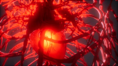 kardiyoloji : Blood vessel system and heart Stok Video