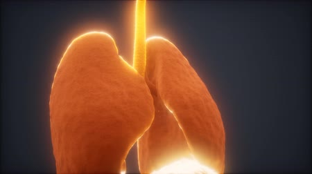 x線 : 3d animation of human lungs