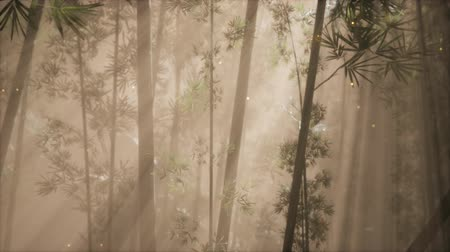 életerő : asian bamboo forest with morning fog weather