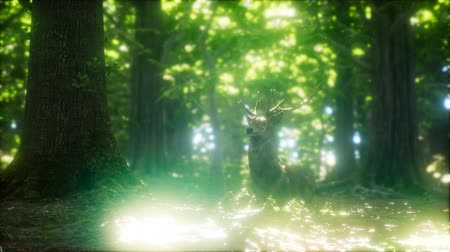 geyik : Great Red Deer in a Green Forest