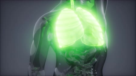 radiologie : Human Lungs Radiology Exam