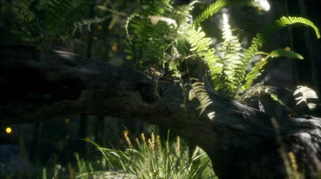 paproć : horizontally bending tree trunk with ferns growing, and sunlight shining Wideo