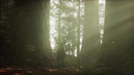paroh : Beautiful deer in the forest with amazing lights at morning