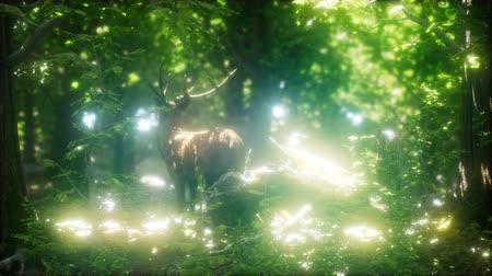 hoof : Great Red Deer in a Green Forest