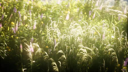 papatyalar : wild flowers in the field Stok Video