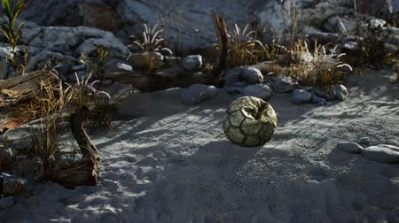 volleyball : An old torn soccer ball thrown lies on sand of sea beach