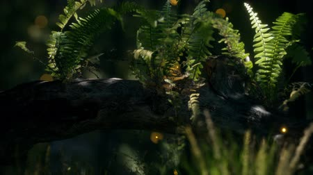 pień : horizontally bending tree trunk with ferns growing, and sunlight shining Wideo