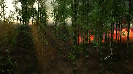 сжигание : Wind blowing on a flaming bamboo trees during a forest fire Стоковые видеозаписи
