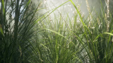 kwiaty polne : Grass flower field with soft sunlight for background.
