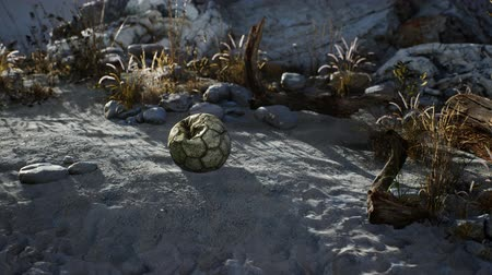 futball labda : An old torn soccer ball thrown lies on sand of sea beach