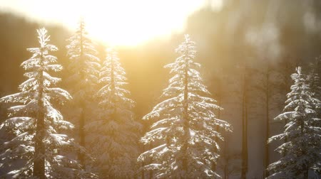 esplêndido : Splendid Christmas scene in the mountain forest. Colorful winter sunrise