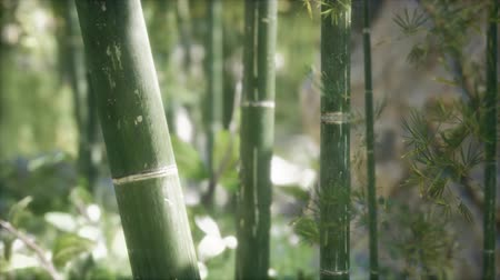 дзен : Green Bamboo trees forest background