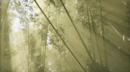 tropikal iklim : asian bamboo forest with morning fog weather