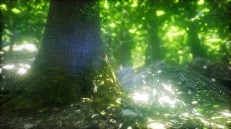 iluminado para trás : Sunbeams Shining through Natural Forest of Beech Trees