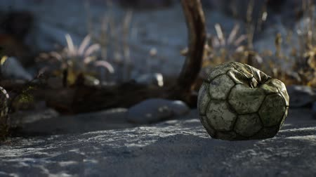 mentiras : An old torn soccer ball thrown lies on sand of sea beach