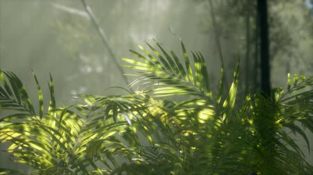 nepal : bright light shining through the humid misty fog and jungle leaves