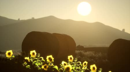 rulolar : hay bales in the sunset Stok Video