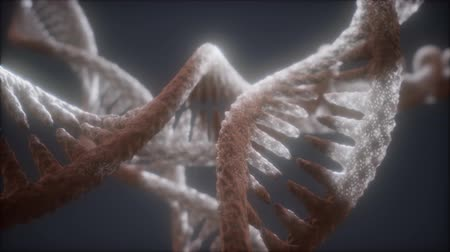 digital code : loop double helical structure of dna strand close-up animation