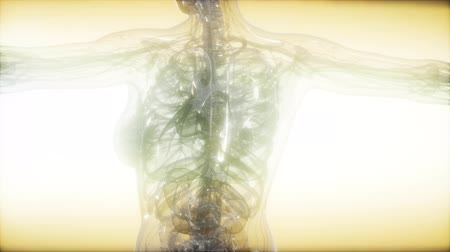 abeceda : X-Ray Image Of Human Body
