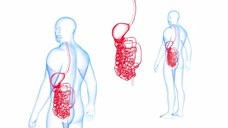 dyspepsia : Human Body GI tract X-ray effects Loop Rotation. 3d render Full HD
