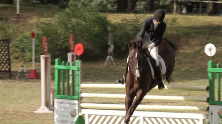 salto : show jumping with horses