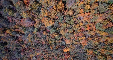 эпический : Aerial, Beautiful Autumn Colors In Velebit, Croatia - Graded and stabilized version.
