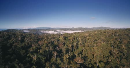 forestal : Aerial, Rainforest In Reserva Forestal Golfo Dulce, Costa Rica, graded Material Stock Footage