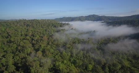 forestal : Aerial, Rainforest In Reserva Forestal Golfo Dulce, Costa Rica, native Material