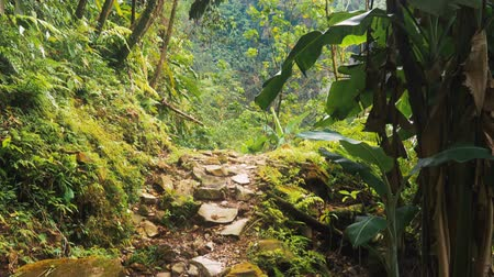liaan : Smalle wandelweg in de jungle, Costa Rica, Graded-versie Stockvideo