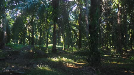 liaan : Palm Jungle Panorama