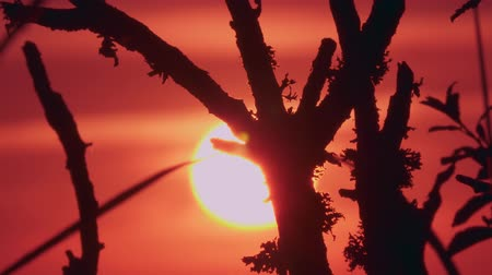wschód słońca : Time Lapse, Close Up, Sunset Through Branches Wideo