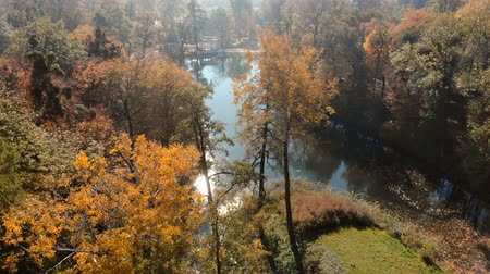 save the animals : drone shot above water surface in autumn forest Stock Footage