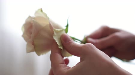обрезки : Female hands of florist clean bud of rose from extra petals, close-up
