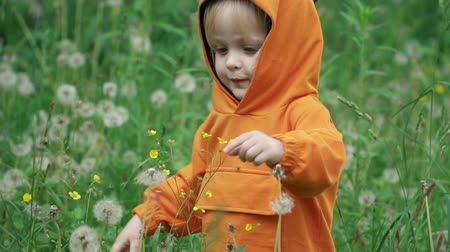 piada : Little boy in orange hoodie plays with dandelion on nature, slow motion Stock Footage