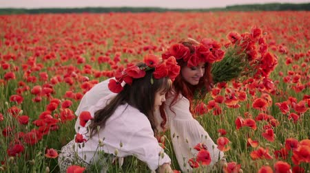 koszorú : Young mother with little daughter collect red poppy flowers in a blossoming field, slow motion Stock mozgókép