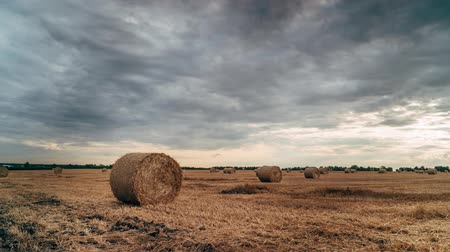 balya : Round Stacks of straw on mowed field, timelapse