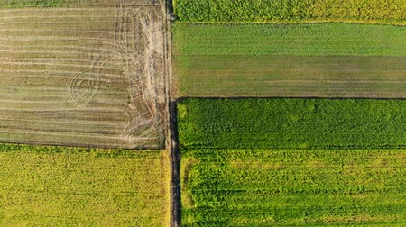 幾何学的配置庭園 : Aerial view from top to bottom multi-colored plots of agricultural field on a sunny day 動画素材