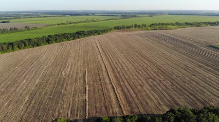 tisztított : Aerial view of a large agricultural field after harvesting on a sunny day, drone shot