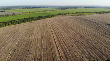 čištěný : Aerial view of a large agricultural field after harvesting on a sunny day, drone shot