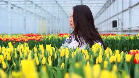 Young woman greenhouse worker collects tulips. Slider shot. Stock Footage